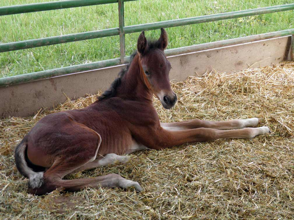 Bay colt by Ferric BP out of Cola